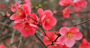 红色开花的柑橘 库存图片