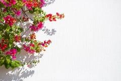 红色开花agaist白色墙壁有益于背景 免版税库存照片