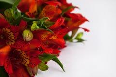 红色德国锥脚形酒杯,秘鲁百合或秘鲁百合花束花 被隔绝的白色背景,拷贝空间 库存照片