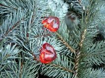 红色心脏和云杉绿色分支,华伦泰` s天 免版税库存照片