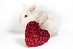 红色心脏和白色兔宝宝 免版税库存照片