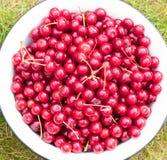 红色成熟樱桃的收获在一大ena收集 库存照片