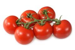 红色成熟的蕃茄藤 免版税库存图片