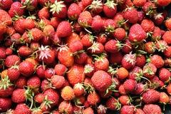 从红色成熟草莓的背景结果实顶视图特写镜头 库存照片