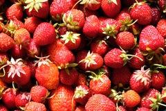 从红色成熟草莓的背景结果实顶视图特写镜头 免版税库存照片