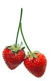 红色成熟草莓 库存照片