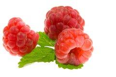 红色成熟莓。 库存照片