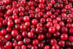 红色成熟蔓越桔背景 库存图片