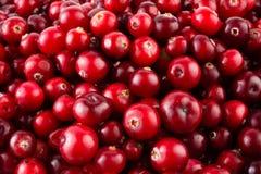 红色成熟蔓越桔背景 免版税库存图片