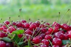 红色成熟酸樱桃 免版税库存照片