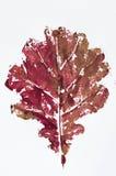 红色打印的秋天背景 免版税库存图片