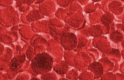 红色抽象的血细胞 免版税图库摄影