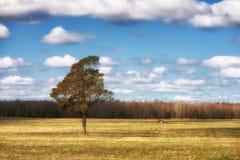 红色拖拉机在春天的犁一个领域有杉木的 库存图片
