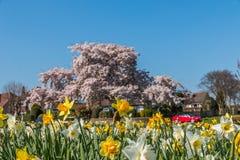 红色敞篷车汽车在春天阳光下 免版税库存照片