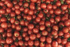 红色新蕃茄背景 在农厂市场上的自然地方产品 收获 季节性产品 食物 库存图片