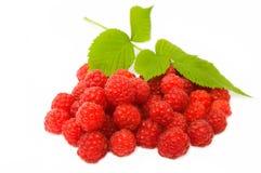 红色新鲜的叶子的莓 库存照片