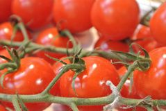 红色新鲜的有机生物农厂小西红柿特写镜头  库存照片