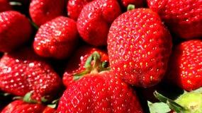 红色新鲜的汁液sping的草莓 免版税库存图片