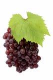 红色新鲜的葡萄 库存照片