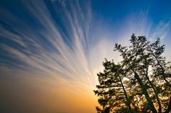 红色日落和蓝天与树枝在 图库摄影