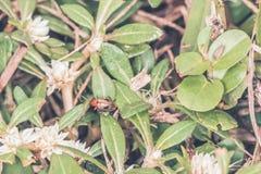 红色昆虫在森林里 免版税库存图片
