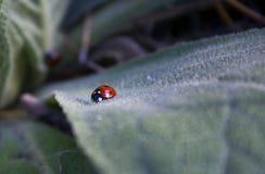 红色昆虫 免版税库存照片