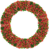 从红色春天分支的圆的框架 库存图片