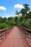 红色木方式在森林里 库存照片