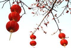 红色木棉的灯笼 图库摄影