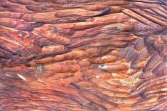 红色木头背景  免版税库存照片