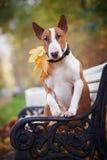 红色杂种犬坐长凳 免版税图库摄影