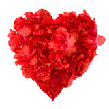 红色杜娟花的样式开花以心脏的形式 免版税库存照片