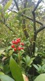 红色果子 免版税库存图片