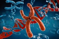 红色染色体 免版税库存照片