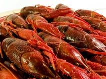 红色查出的龙虾 免版税库存照片