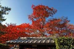 红色树在日本 免版税库存图片
