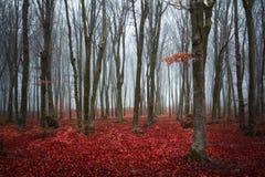 红色树在森林里 免版税库存图片