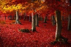 红色树在森林里 免版税库存照片