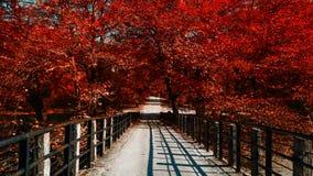 红色树桥梁 免版税库存照片