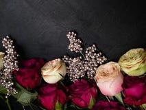 红色桃红色玫瑰变成银色装饰黑暗的花卉背景 库存照片