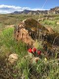 红色桶式仙人掌风景 库存图片