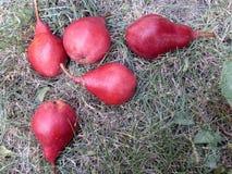 红色梨 免版税库存图片