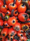 红色棕榈球 库存图片