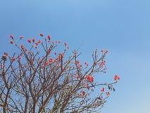 红色棘手的树 图库摄影