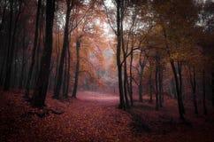 红色森林在秋天 库存图片