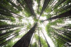 红色森林-新西兰 免版税库存图片