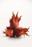 红色榛子 免版税图库摄影