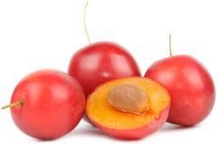 红色樱桃的李子 库存图片