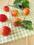 红色樱桃的李子 库存照片