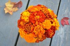 红色橙黄色万寿菊特写镜头  免版税库存照片
